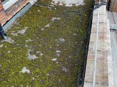 moss and debris